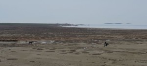 Salt Lake shepherd